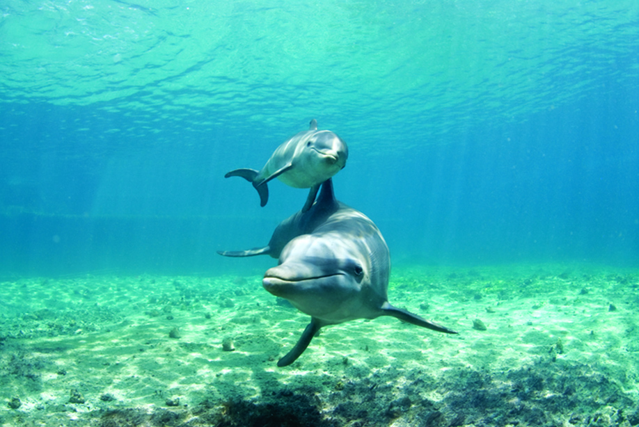 Facts about Dolphins: Did you knew? Let's talk about them