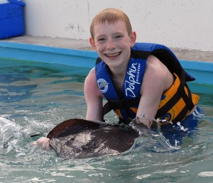 Stingray Experience Dolphin Discovery