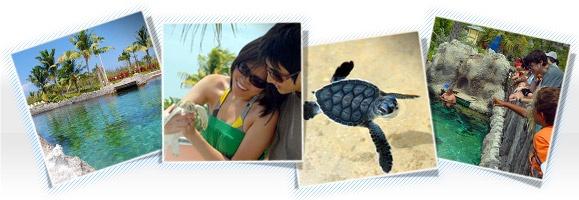 Boatswain's Turtle Farm Grand Cayman