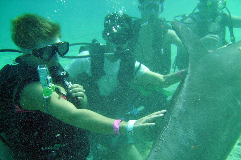 Diving with dolphins in Cozumel