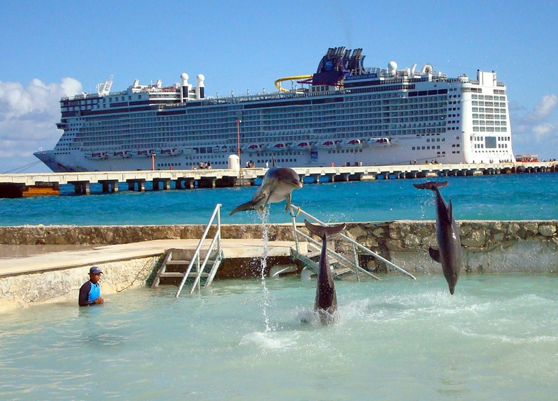 Costa Maya Tours-  Swim with Dolphins