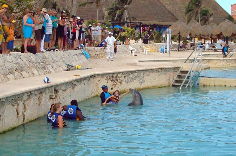 Costa Maya Tour Dolphin Discovery