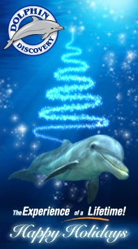 Happy Holidays from Dolphin Discovery!