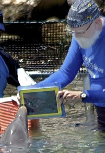 Merlin the iPad Dolphin