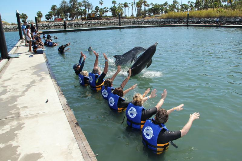 Dolphin Discovery Los Cabos Opening Day