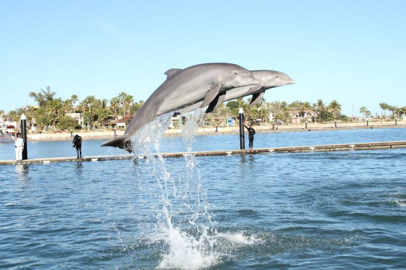 Dolphin Discovery Los Cabos