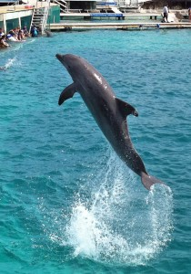 Dolphin Discovery Leap Isla Mujeres