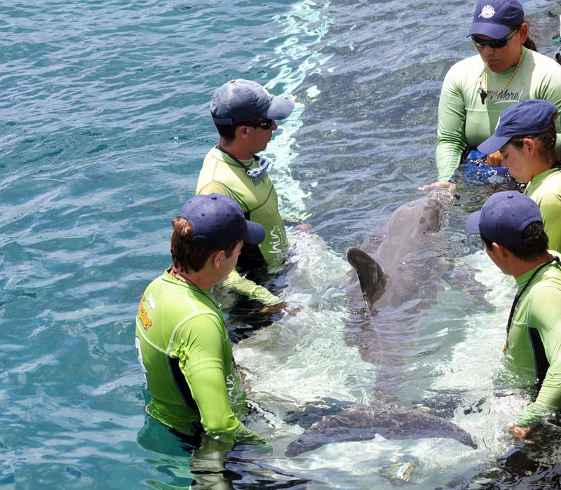 Trainers & dolphin rehearse the stretcher behavior