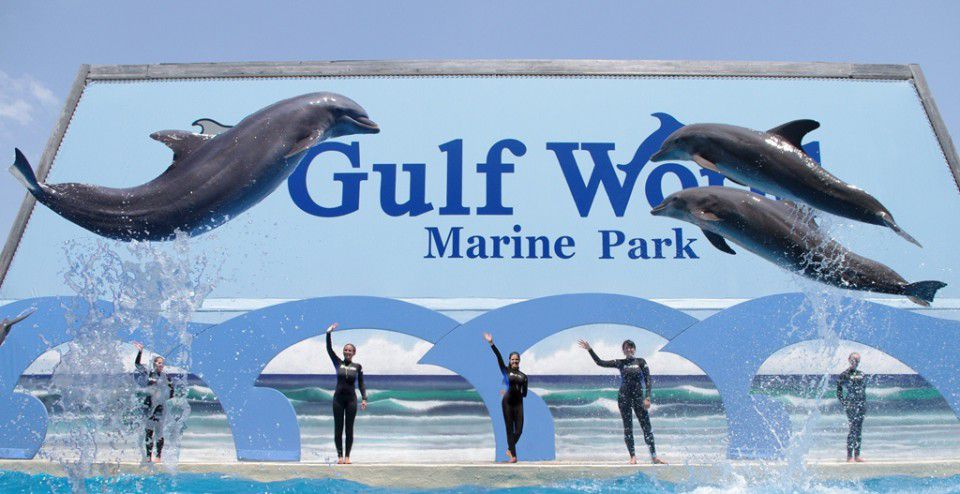 Dolphin Discovery welcomes Gulf World Marine Park