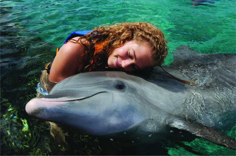 Dolphins under human care