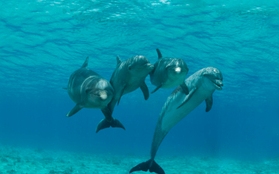 Five facts about dolphins, discover them!
