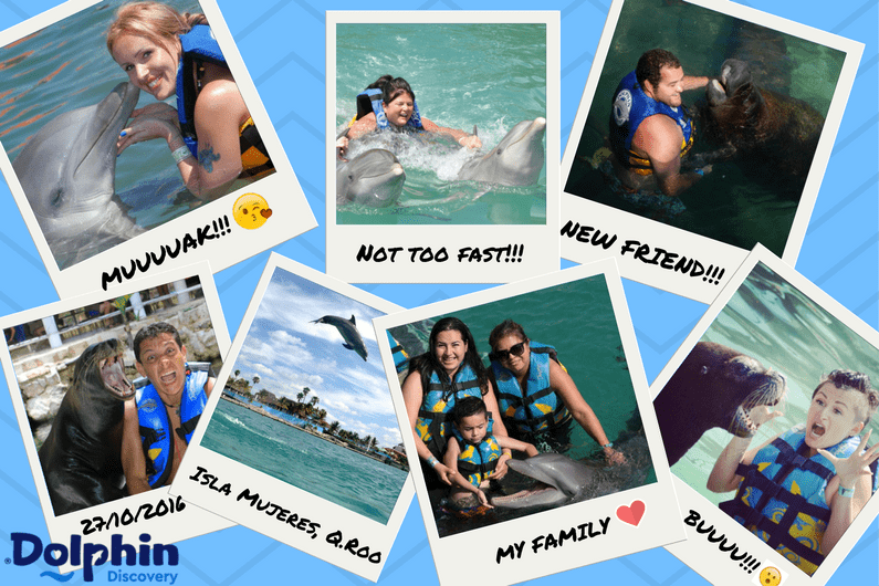 Pictures with Dolphins: Memories of an Unforgettable Moment