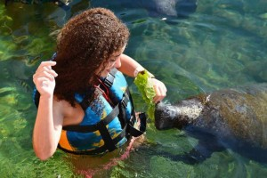Girl feeding manatees
