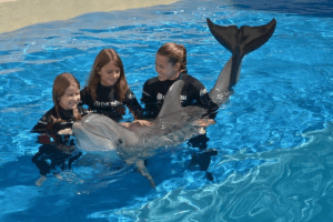 Kids swimming with Dolphins in Florida
