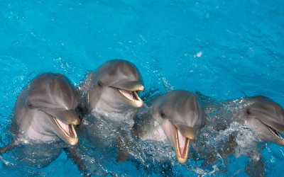 Learn About Dolphin's World