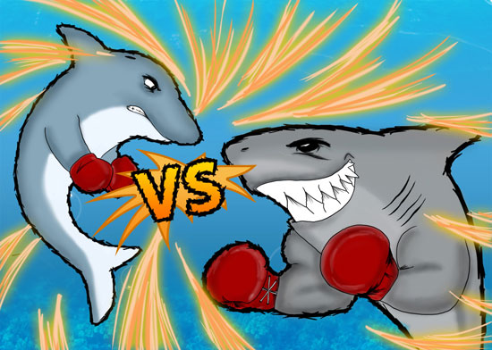 Are Sharks Afraid Of Dolphins Dolphin Discovery Blog